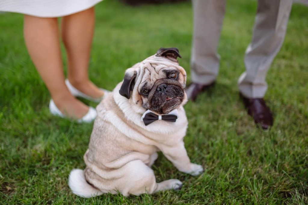 Want your dog at your wedding?
