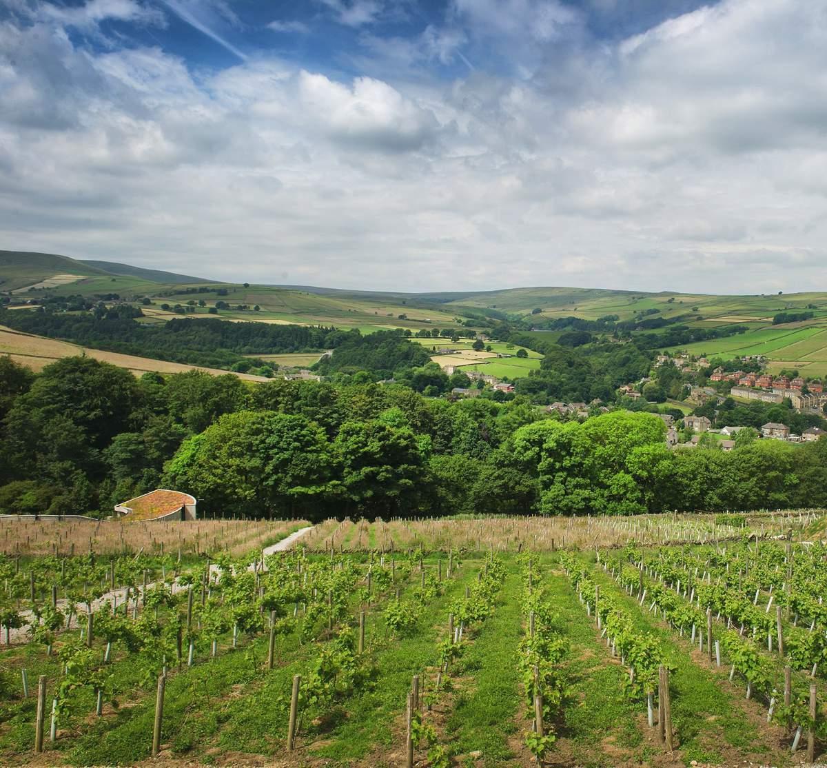 Vineyard Wedding: New Wedding Venue Idea: I Dos In A Vineyard...