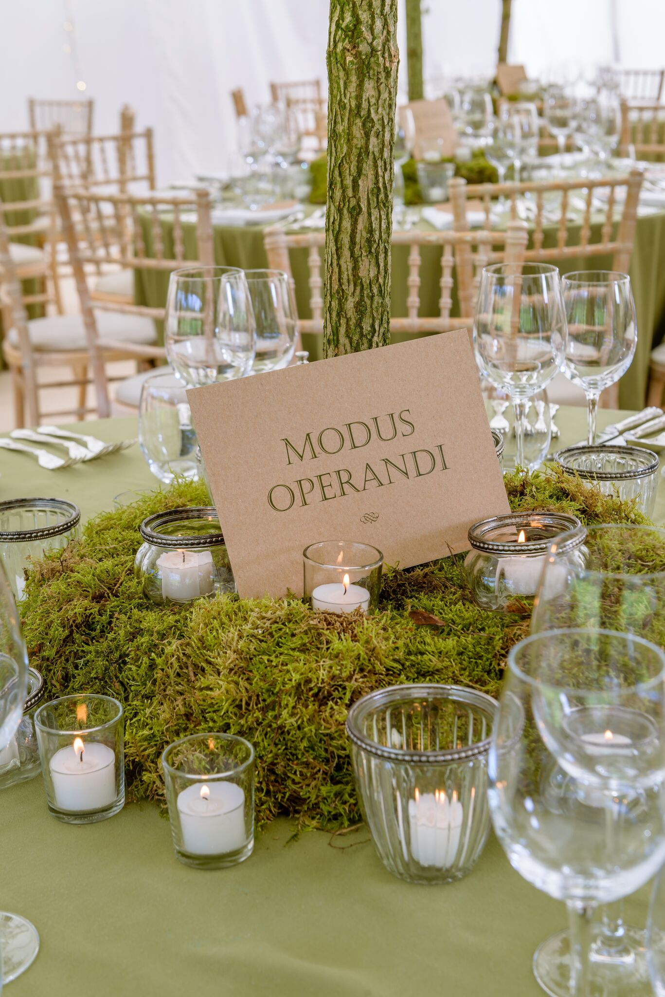 Get-Knotted Enchanted Forest theme table decor (image credit - kevingreenfield.com) (3)_preview